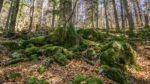 El bosque esloveno