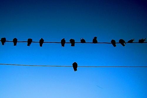 alone-bird