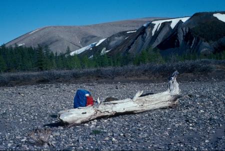 Árboles fósiles, negacionistas del calentamiento global y matemáticos avezados