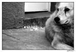 Se quiere gobernar la ciudad desde las páginas sepia de la Vanguardia: el caso de la perrera municipal